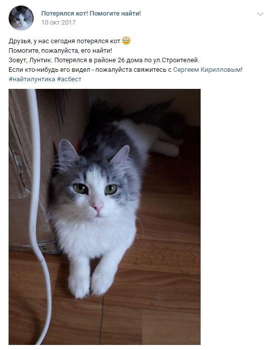 Как я нашел дважды сбежавшего кота